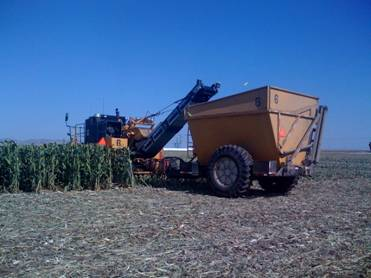 Harvester Throwing Corn